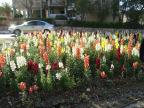 flowery-dividers