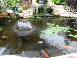 gold-fish-pond