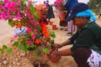 kalisher gardening