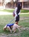 Seeing-eye dog at BGU