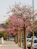 trees-on-weizman-st-october