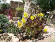 varied-desert-gardening